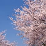 🌸春の体験レッスンキャンペーン🌸
